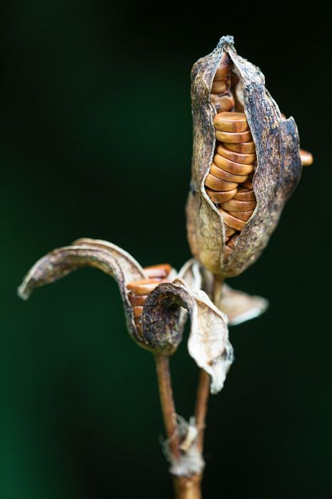 pods from professional garden photographers.