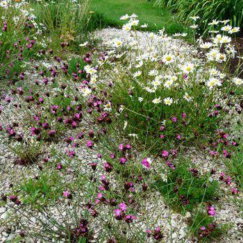 :: Dianthus carthusianorum - Karthäuser-Nelke :: Mit Stauden gestalten :: Kiesgarten / Gravel Garden - Pflanzenversand Gaissmayer