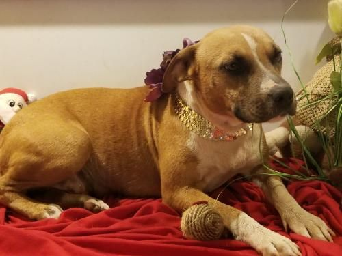 Vacaville Ca Annie Rose Is An Adoptable Dog American