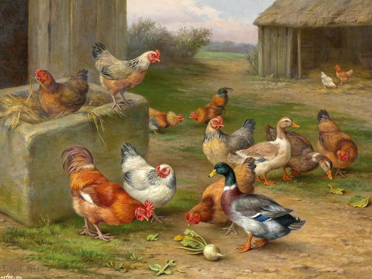 Петухи и курицы – 78 фотографий