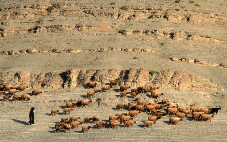 Transhumance - Djebel Saghro - Maroc