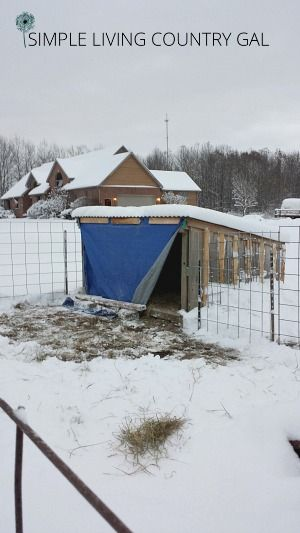goat shelter how to