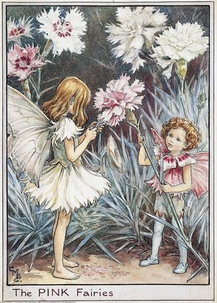 Illustration for the Pink Fairies from Flower Fairies of the Garden. A girl fairy stands facing right using scissors to trim the edge of a pink flower which is being held up by a young boy fairy standing on the right. Author / Illustrator Cicely Mary Barker