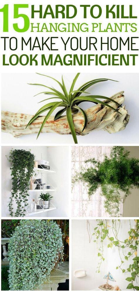 15 robuste hängende Pflanzen, die Ihr Zuhause großartig aussehen lassen