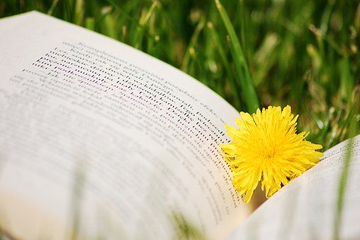 Książka, Mlecz, Natura, Trawa