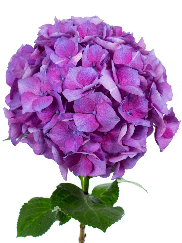 66 besten violette hochzeit bilder auf pinterest hochzeiten lavendel und hochzeit deko. Black Bedroom Furniture Sets. Home Design Ideas