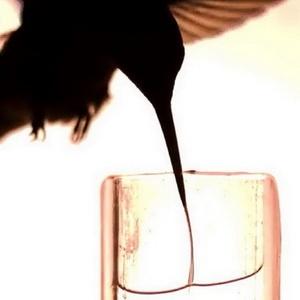 Lidah Burung Kolibri Archilochus colubris