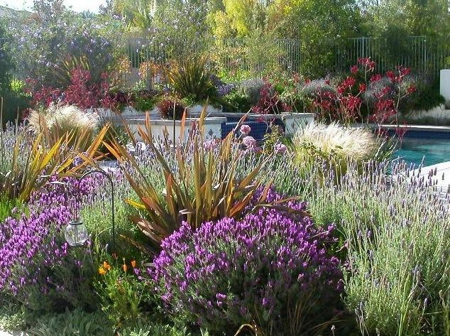 Best 10+ Drought resistant landscaping ideas on Pinterest - drought tolerant garden designs