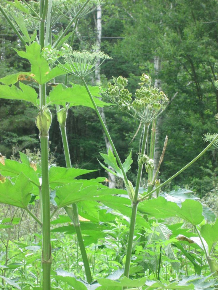 Plant Database: 38 Best Plant Identification Images On Pinterest