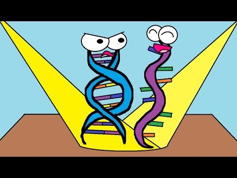 """""""Why RNA is Just as Cool as DNA."""" DNA is always hogging the limelight. We're here to tell you why RNA is just as important (and as cool) as DNA! We'll compare and contrast RNA with DNA and also talk about the three types of RNA. This video sets the stage for protein synthesis."""