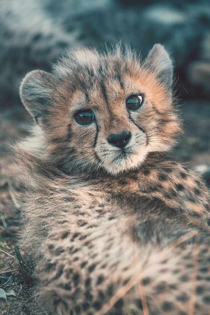 достопримечательностях дикие милые животные фото нет шезлонгов