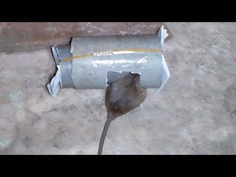 How to make a mouse trap - Homemade mouse trap - DIY mouse trap - YouTube