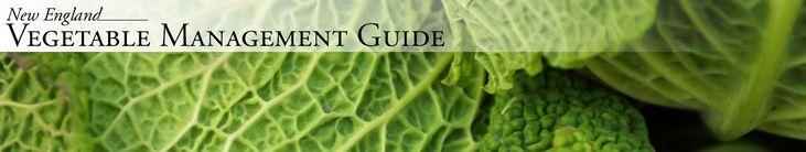 University of Massachusetts Amherst | New England Vegetable Guide
