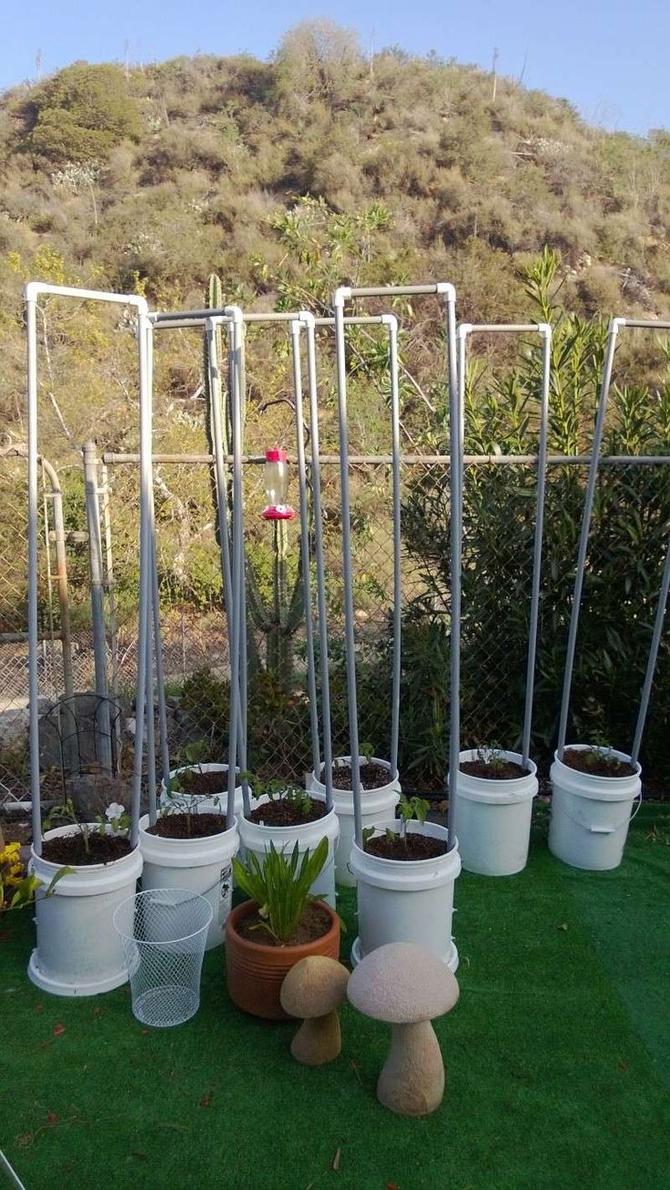 Growing Indeterminate Tomatoes In A Container Tomato 400 x 300