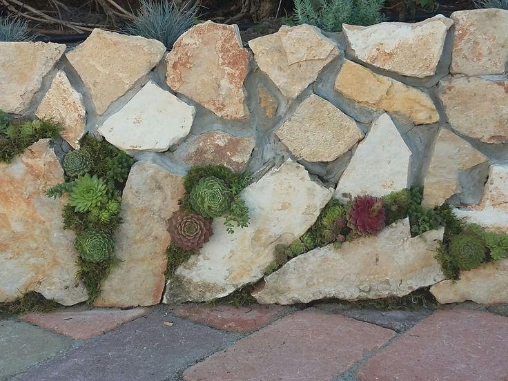 Élet a kővekben