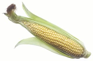 CRAZY deal on corn!!