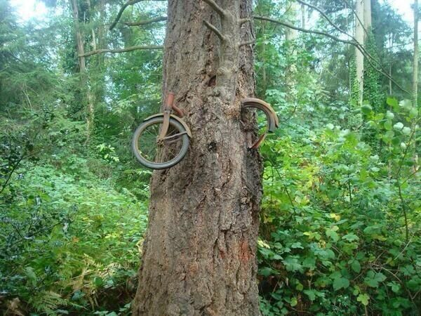 In 1914 a boy chained his bike to a tree to go fight in the war, he never returned