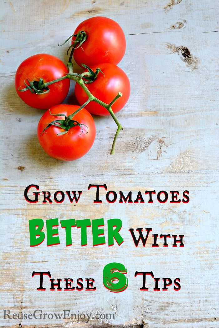 how to grow cherry tomatoes youtube