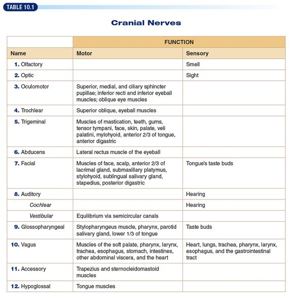 how to remember cranial nerves and their functions