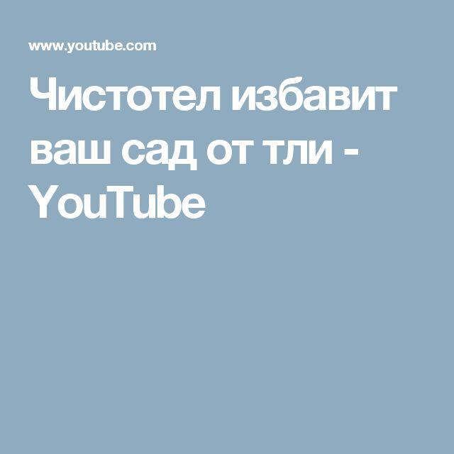 Чистотел избавит ваш сад от тли - YouTube