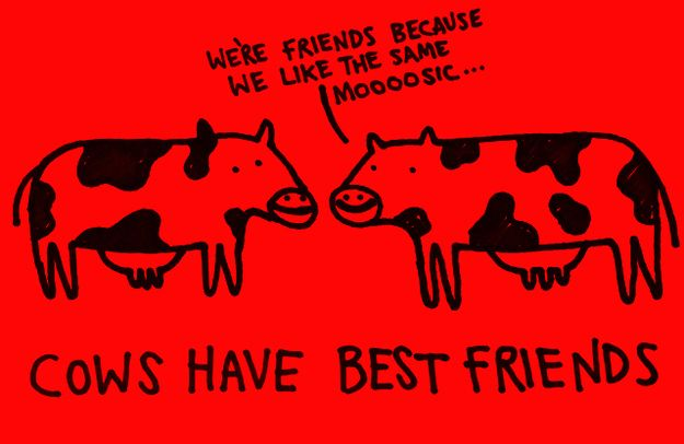 Cows have best friends.    According to scientists at Northampton University, cows have BFFs and are stressed out when away from them.