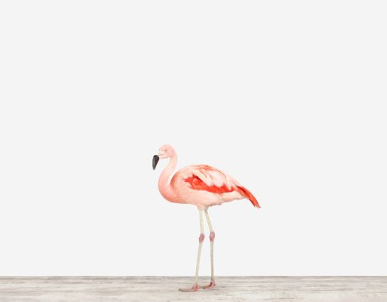 I would frame this HUGE with a simple white frame and just let this gorgeous pink creature be the star.  Look at those colors!  #carouseldesigns @Veracelle Hansen