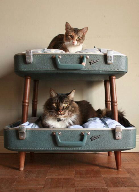 We have a sneaking suspicion that all cats dream about bunk beds.