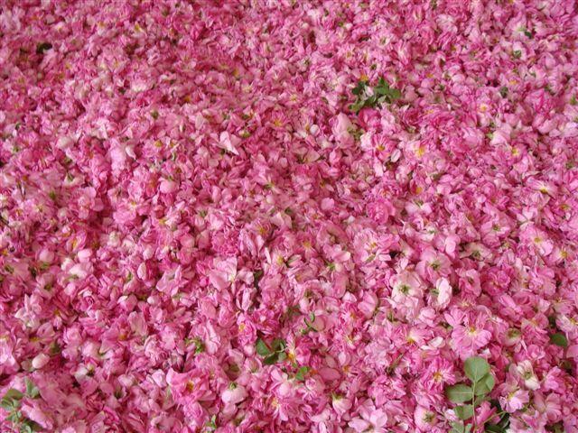 Rose petals- Rose water-