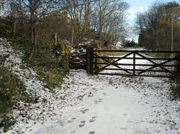 snow covered path in Castle Eden Dene - a favourite haunt of my childhood