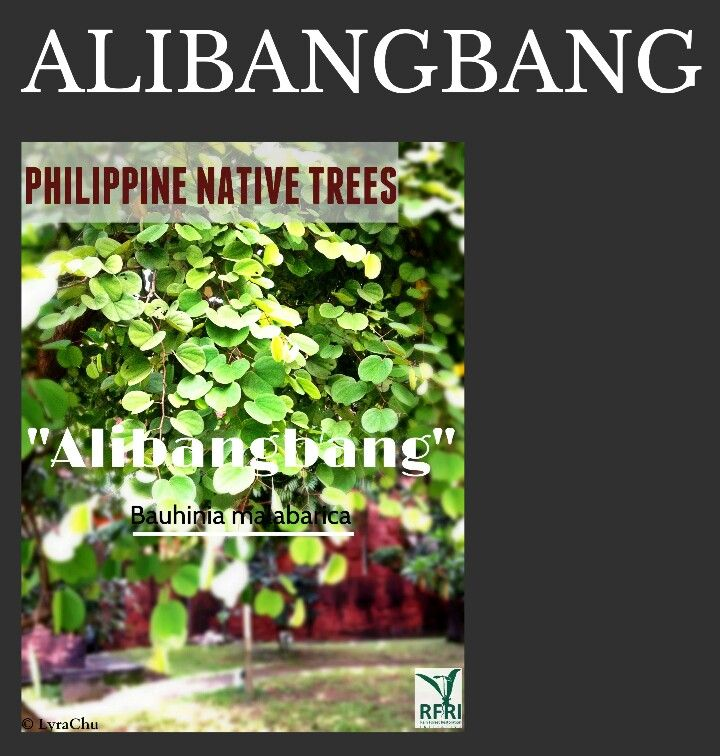 72 best philippine native trees images on pinterest