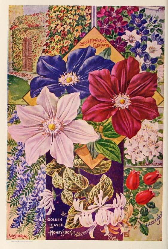 664 Best No5 Vintage Plant Seed Catalogues