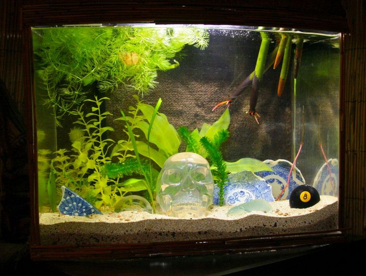 Your Fish Tank | Aquarium-HQ.com