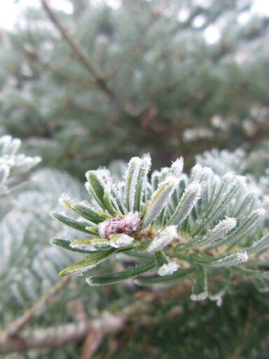 Talvihavu