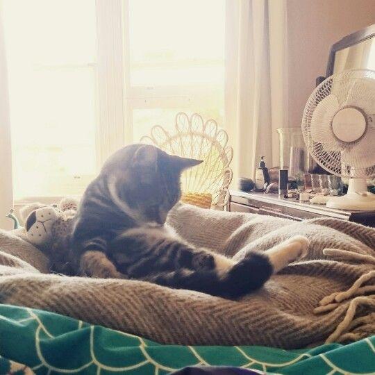 Thomas the cat.