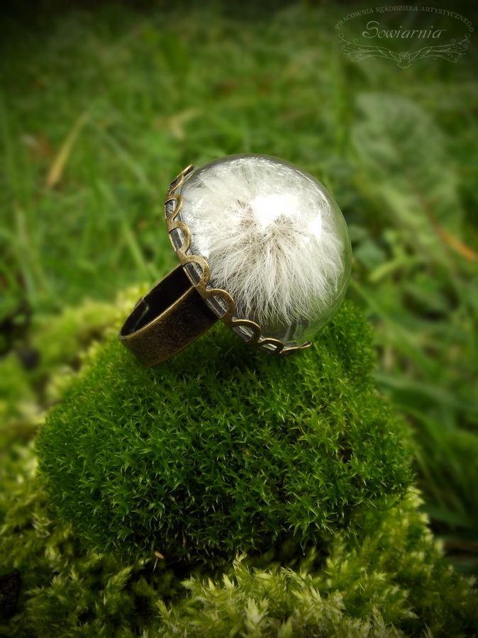 Dandelion under the glass dome