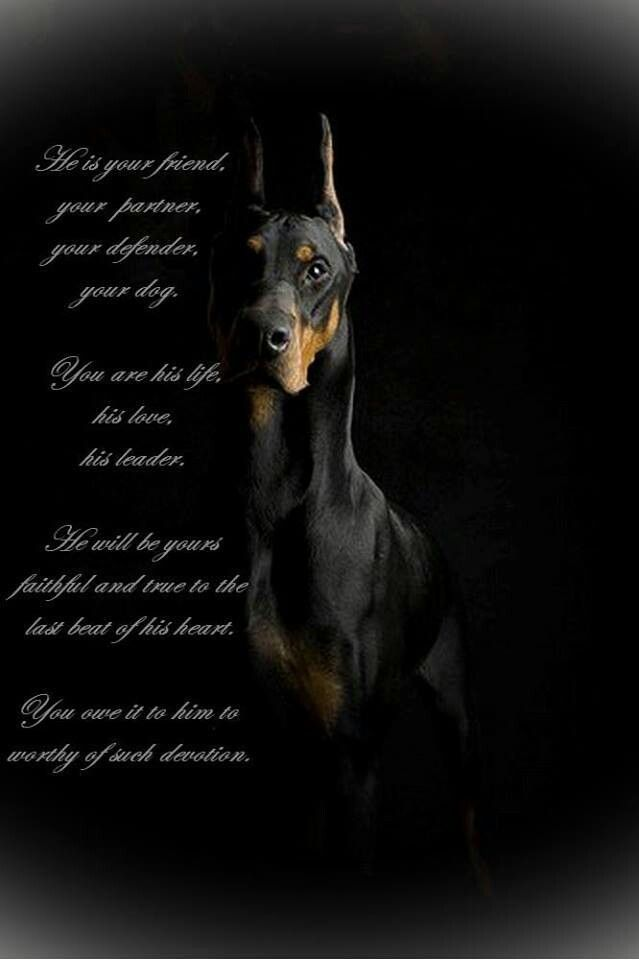 "4 years ago my BF bought ""me"" my first dog, it was a female dobie and we named her Bella! It was his 3rd Doberman and my first......... She changed everything. Once you go dobie you never go back!"