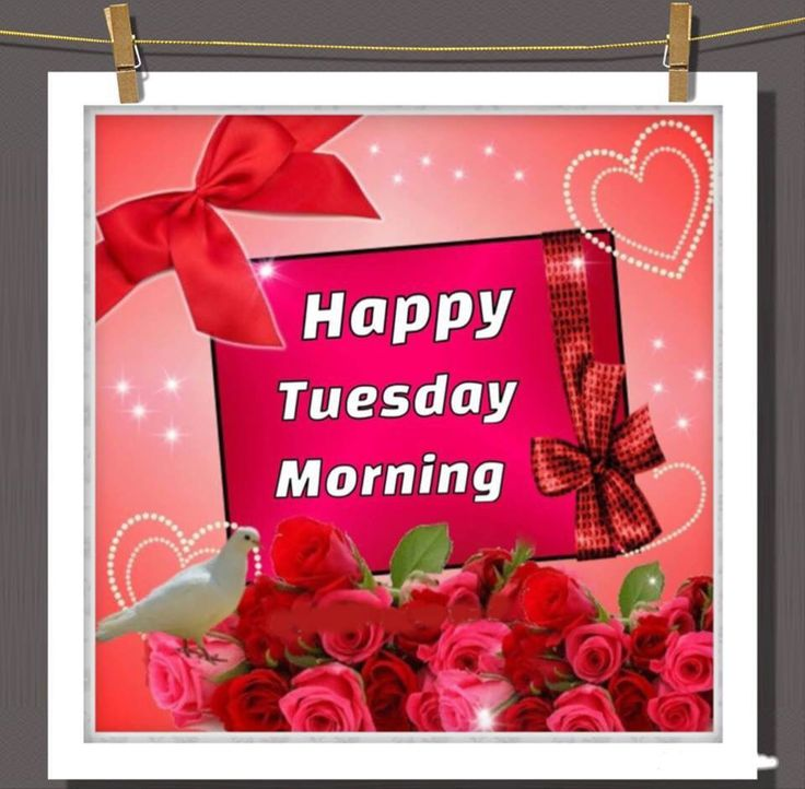 Happy Tuesday Morning Pictures Photos And Images For