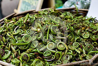 Fiddleheads For Sale At Farmer's Market - Download From Over 56 Million High Quality Stock Photos, Images, Vectors. Sign up for FREE today. Image: 48517430