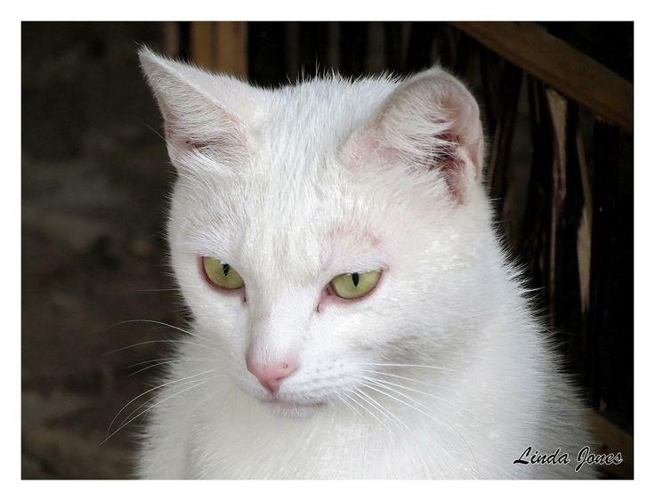 Cloud - White cat - love