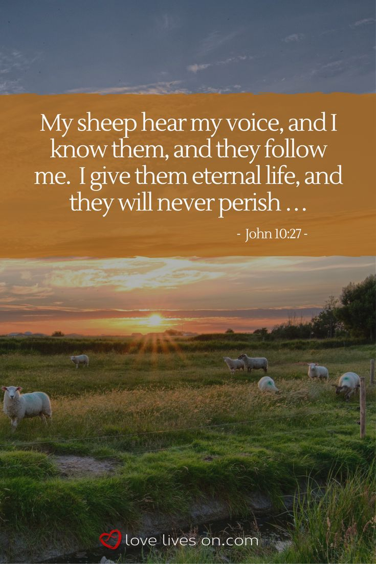 Bible verse for funerals from John 10: 27. Click for 100+ more popular pieces of scripture for a funeral service.