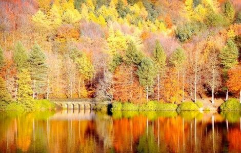 Fall In Colors