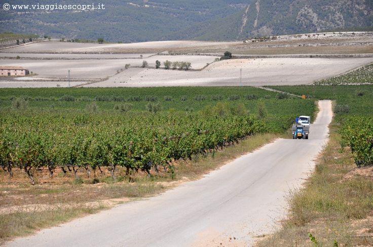 Vino spagnolo, i vigneti del Celler del Roure a Les Alcusses #regionedivalenciatrip http://www.viaggiaescopri.it/vino-spagnolo-nella-giara-valencia/