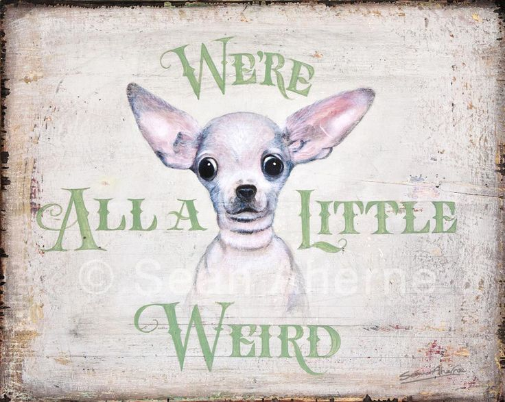 Smooth Chihuahua Dog Shabby Chic Wooden Sign Print by Sean Aherne for Dog Lovers