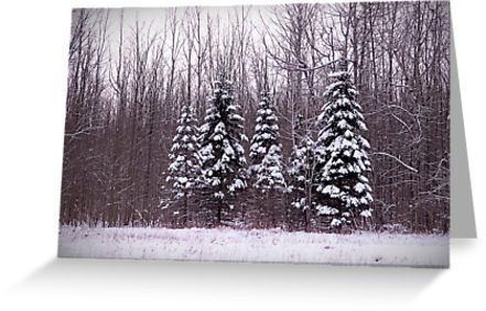 I found this scene on a country road somewhere in Sanborn NY just after a massive snowfall. This group of fur trees caught my eye but we continued to drive along as I said nothing. I couldn't remove this sight from my eye so about a half hour later I told my husband we needed to back track. Thank goodness he loves me because he indulged my need to return. Once we found my trees I then needed to hike into the snowy field a little ways to get just the right shot but I think it was wor...