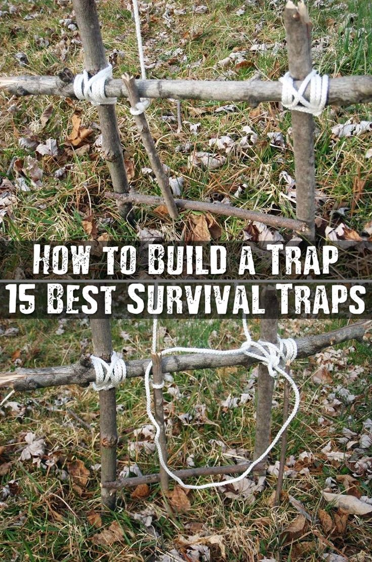 How to Build a Trap - If SHTF this is also a great way to make sure you and your family have the chance to catch wild game and get much needed protein into your body. Knowing how to set a simple trap could literally mean the difference between you eating and you dying from starvation.