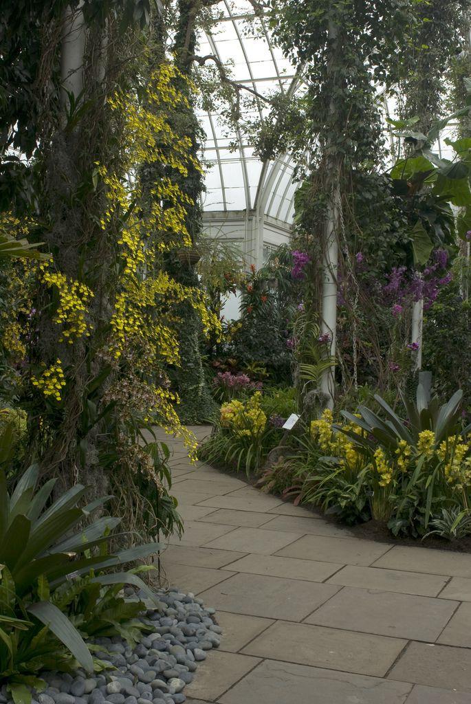 The Orchid Show: Brazilian Modern | da NYBG