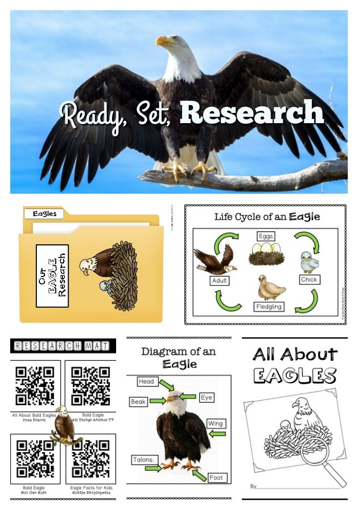 Explore Nonfiction And Informational Writing Through This Eagle Animal Research Project Great For Kindergarten First And Sec Bald Eagle Animals Eagle Animals