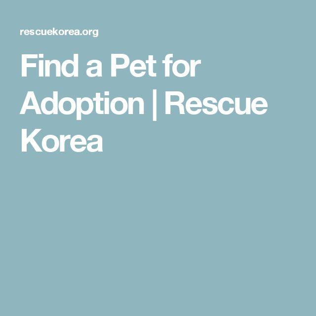 Find a Pet for Adoption | Rescue Korea