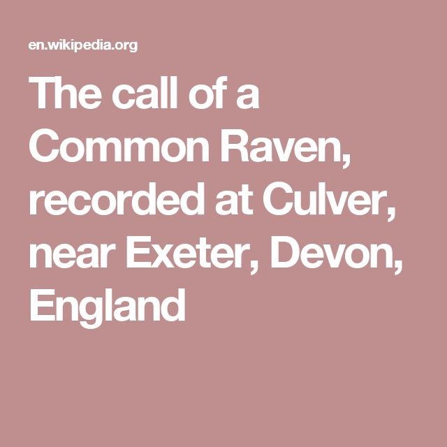 The call of a Common Raven, recorded at Culver, near Exeter, Devon, England