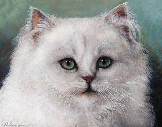 Chinchilla Cat For Sale Nyc